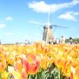 オランダ?